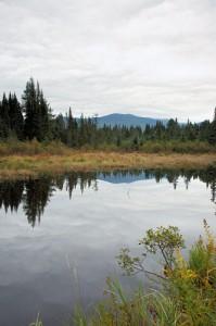 Wetlands area along Beaver Brook (ScenicNH.com Photography)