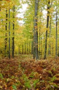 Autumn colors along the Gale River Road
